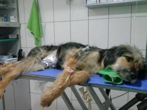 spašavanje psa u Veterinarskoj stanici